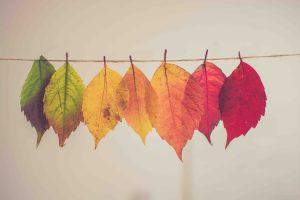 Seasonal Depressive Disorder (SAD) Help and Self Help